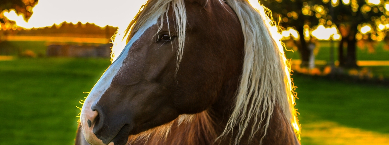 incomodidad del caballo con