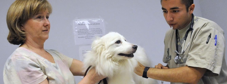 El auxiliar veterinario, mucho más que un asistente en la clínica