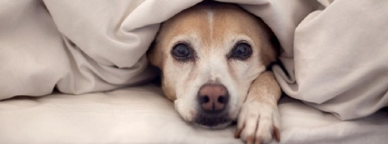 sintomas de perro resfriado